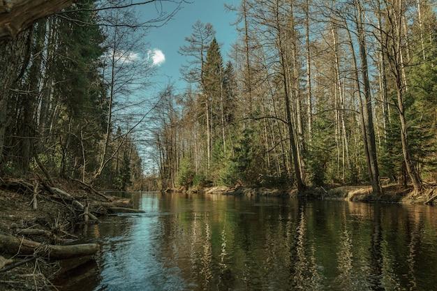 Réflexion de forêt dans la rivière