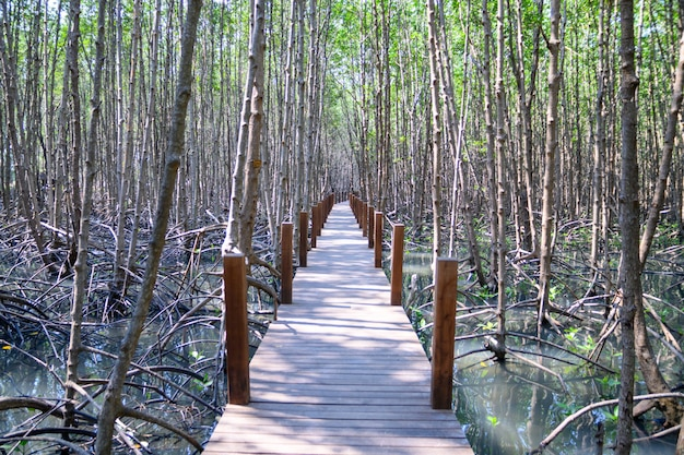 Réflexion de la forêt de mangrove dans le lac