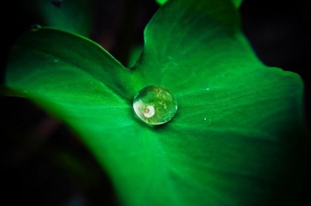 Réflexion goutte d'eau sur une feuille
