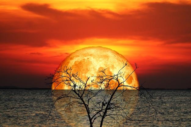 Réflexion pleine croûte de sang lune et arbre silhouette dans la mer et le ciel nocturne, éléments de cette image fournis par la nasa