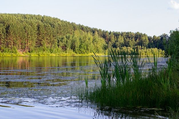 Réflexions sur la forêt de conifères sur un lac sauvage.