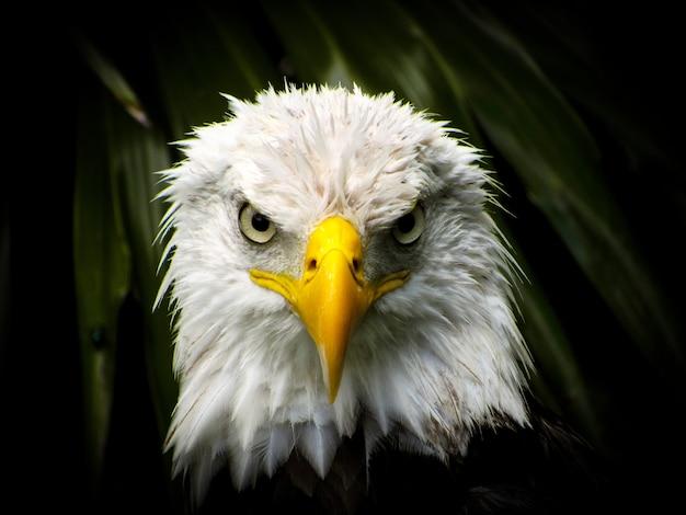Regard d'aigle