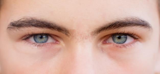 Un regard attentif des yeux du mâle