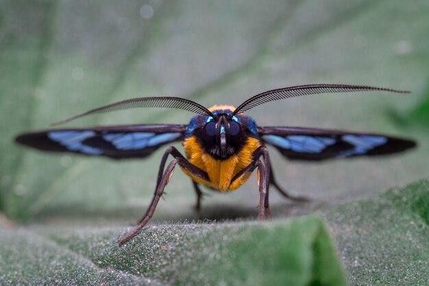 Regard frontal d'un papillon coloré perché sur une feuille