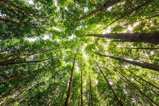 Regardant le ciel aux cimes des arbres
