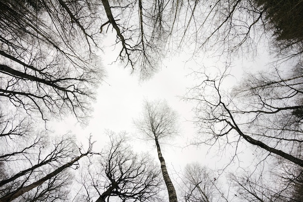 Regardant dans la forêt à l'automne. paysage d'automne gris jour dans les bois