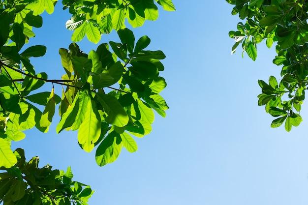 Regardant vers le haut de la feuille avec le ciel bleu et la lumière du faisceau de soleil