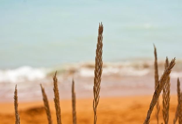 Regarde la mer
