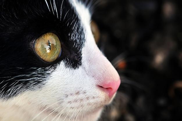 Regarde, oeil de chat