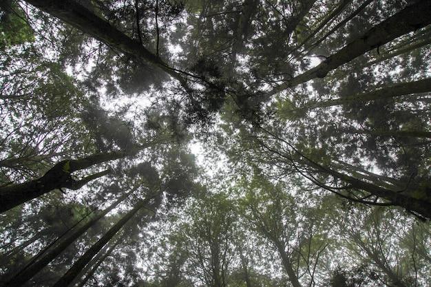 Regardez au-dessus des arbres dans le ciel du parc national alishan à taiwan.