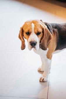Regardez par le haut au chien triste debout sur le sol