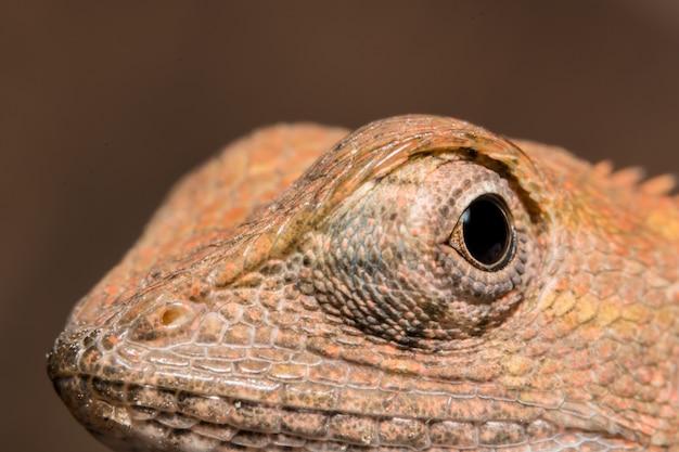 Regardez de plus près le caméléon