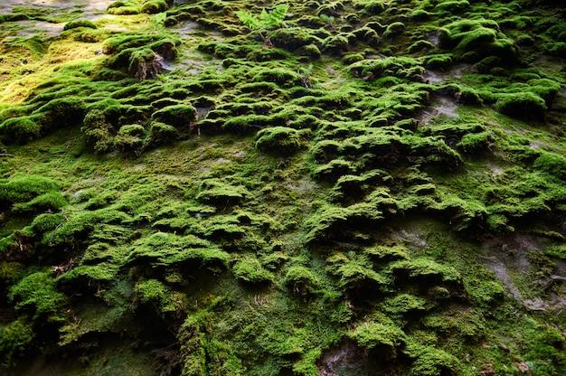 Relief de roche avec de la mousse. fond naturel de falaise. rocher recouvert de mousse.