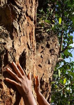 Remettez une grande texture d'arbre dans une journée ensoleillée