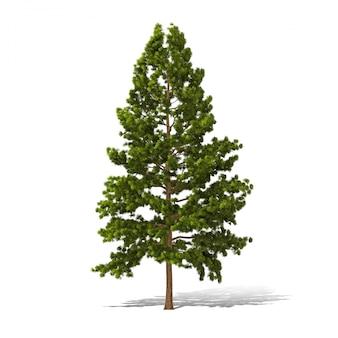 Le rendu 3d des arbres sur fond blanc a un chemin de travail.