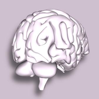 Rendu 3d d'un cerveau médical