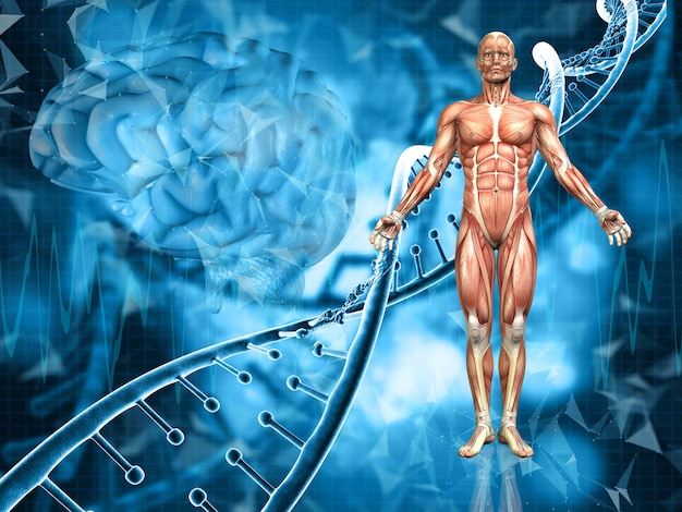Rendu 3d d'un fond médical avec la figure masculine, les brins d'adn et le cerveau