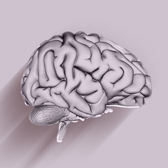 Rendu 3d d'une formation médicale avec cerveau