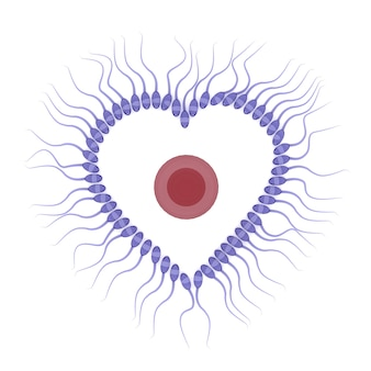 Rendu 3d de sperme avec oeuf isolé sur fond blanc, concept de la saint-valentin