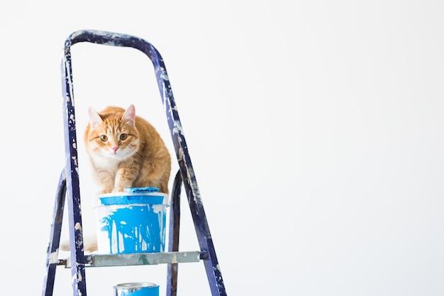 Réparer, peindre les murs, le chat est assis sur l'escabeau. image drôle avec espace copie
