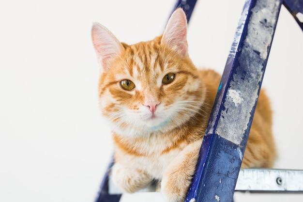 Réparer, peindre les murs, le chat est assis sur l'escabeau. image drôle.