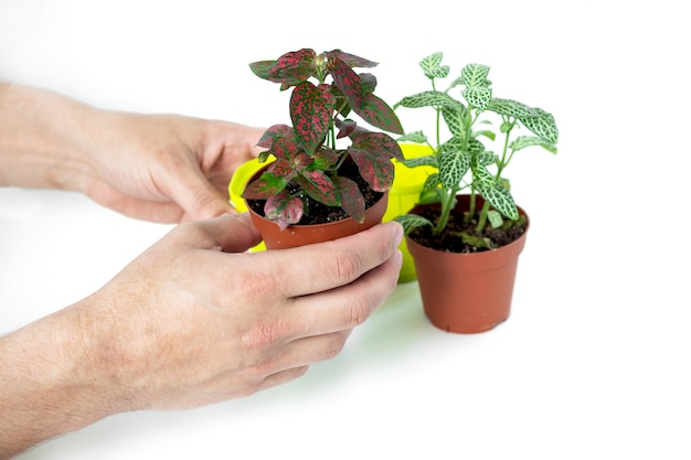 Replanter des fleurs dans le jardin intérieur.