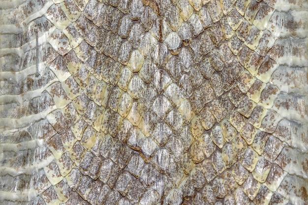 Reptile en peau de serpent pour un motif imprimé animal ou un arrière-plan