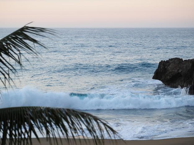 République dominicaine, plage au crépuscule, vagues et branches de palmier. le coucher du soleil. mise au point sélective. flou artistique.
