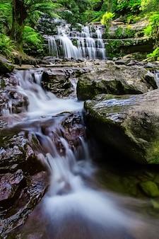 Réserve d'état de liffey falls dans la région des midlands en tasmanie, australie.