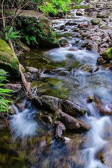 Réserve d'état de liffey falls dans la région des midlands de tasmanie, en australie.