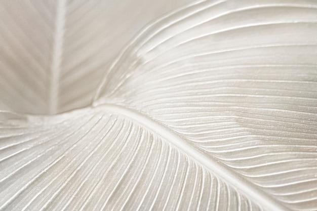 Ressource de conception de fond de feuille d'oiseau de paradis crémeux
