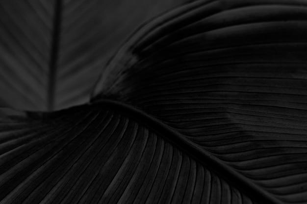 Ressource de conception de fond de feuille d'oiseau de paradis