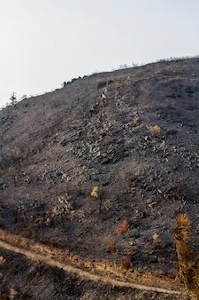 Restes d'un feu de forêt