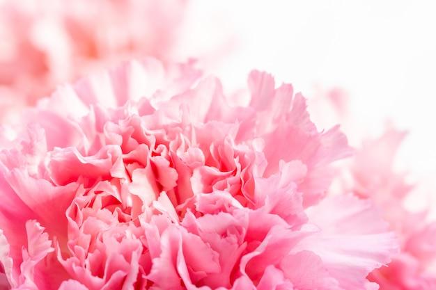 Résumé de fleurs roses, oeillet.