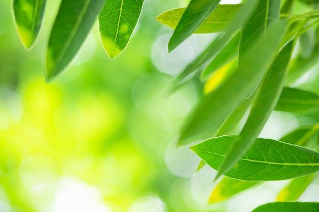 Résumé flou de feuille verte sur fond de verdure floue avec espace copie