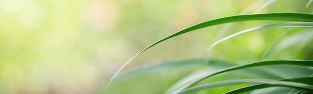 Résumé floue de la nature des feuilles vertes en utilisant comme arrière-plan des plantes naturelles