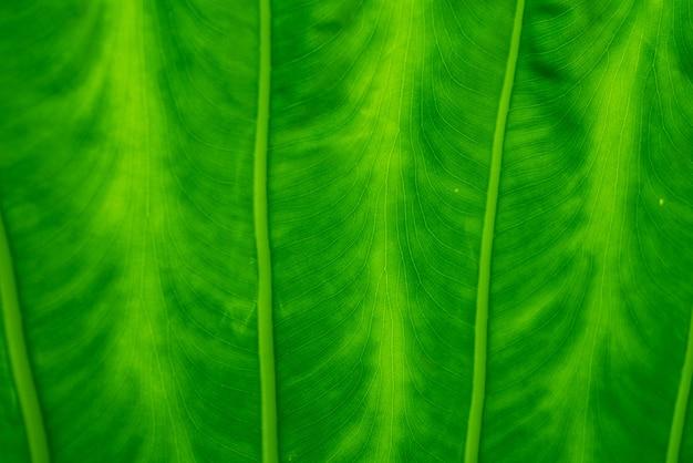 Résumé de fond de nature de feuille verte pour le papier peint