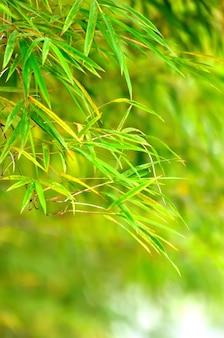Résumé fond vert printemps avec des feuilles de bambou