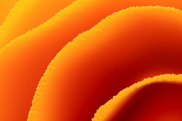 Résumé macro coin ligne papier texture fond