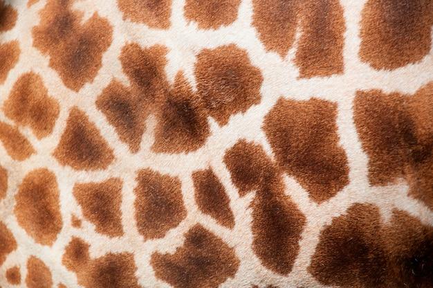Résumé de motif girafe