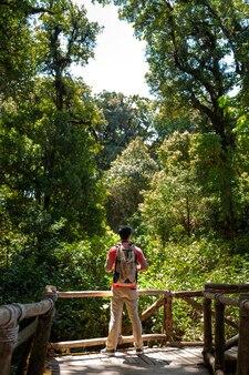 Rétrospective du randonneur en forêt