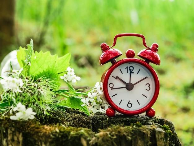 Réveil sur une souche avec un bouquet d'herbes