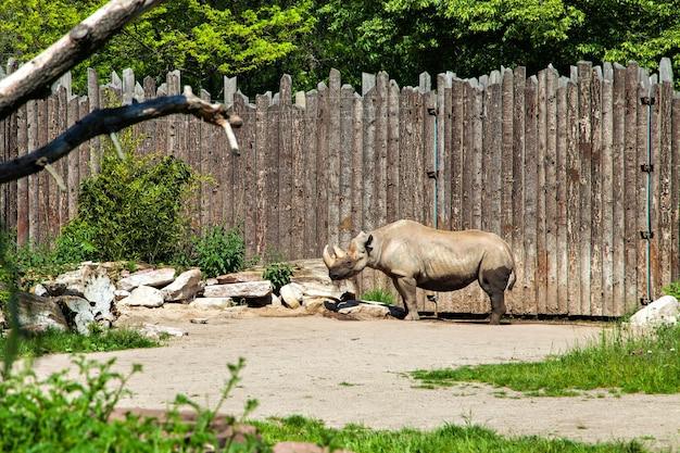 Le rhinocéros, souvent abrégé en rhinocéros, est un groupe de cinq espèces existantes d'ongulés à doigts impairs de la famille des rhinocerotidae