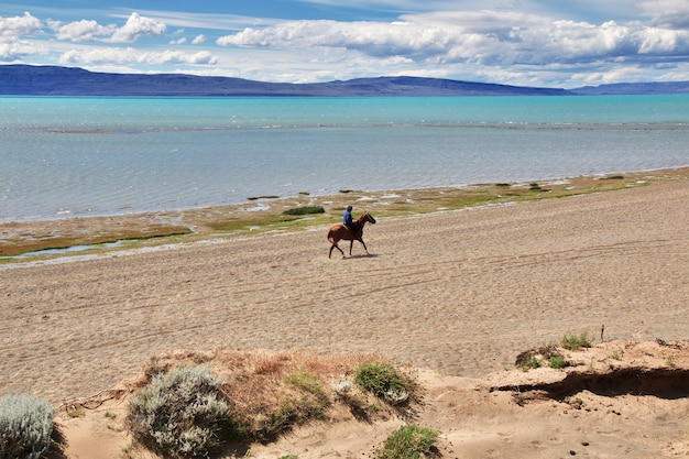 Rider, ranger à laguna nimez reserva à el calafate, patagonie, argentine