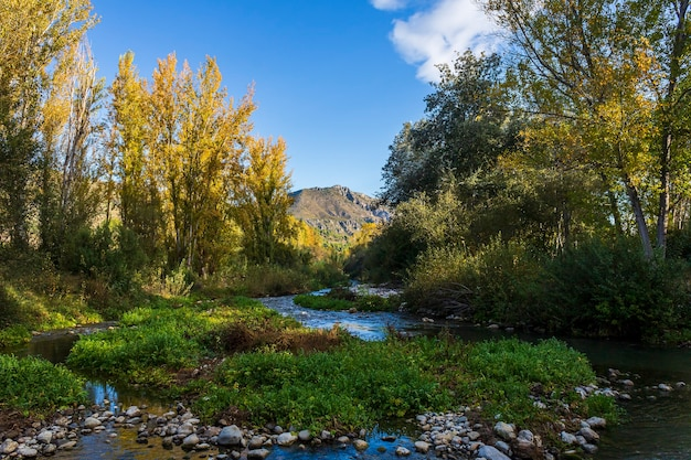 Rio serpis entouré de peupliers et de végétation par temps calme, alicante, espagne.