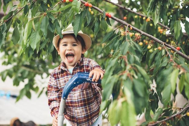 Rire garçon caucasien à l'aide d'un escalier pour ramasser la cerise souriant à la caméra près de l'arbre