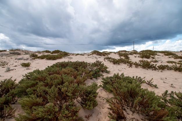 Rivage dunes de sable
