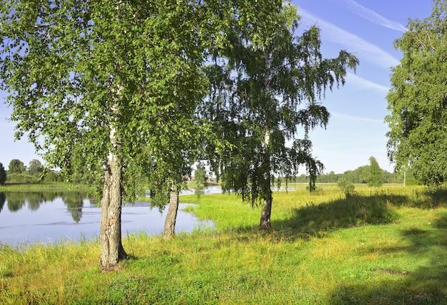 La rive du lac en été bouleaux verts parmi une herbe luxuriante sous un ciel bleu région de novossibirsk