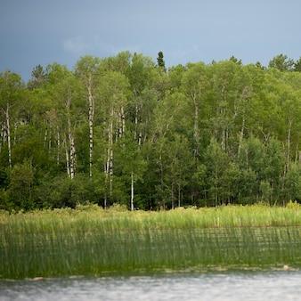Rive le long du lac des bois, en ontario