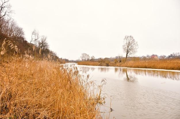 Rive de la rivière avec de l'herbe sèche jaune, rivière d'automne, paysage d'automne, herbe sèche